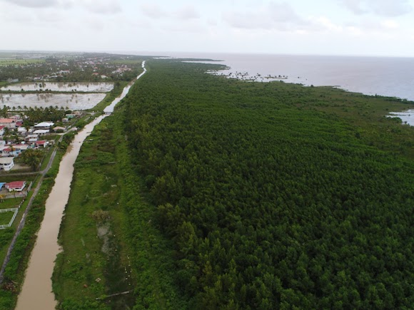 guyana mangroves